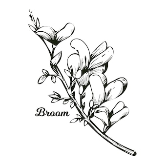 Fiore di ginestra, tintinnio di bosco, erbaccia e lamento, furze, ginestra verde, alga verde, cera di legno di fiori in fiore genista tinctoria, lupino ginestrone e laburno monocromatico.