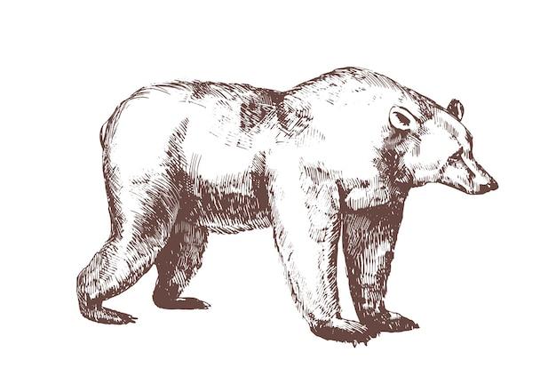 Orso bruno disegnato a mano con linee di contorno su sfondo bianco.