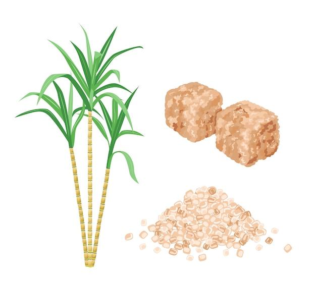 Pianta di cubetti di zucchero di canna marrone e mucchio di zucchero di sabbia