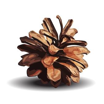 Cono del pino marrone isolato su bianco