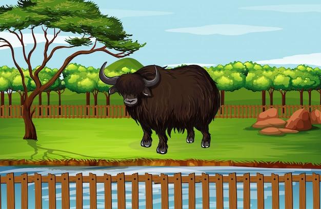 Buffalo in piedi nello zoo