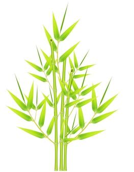 Mazzo di bambù su uno sfondo bianco