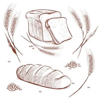 Mazzo di spighe di grano e illustrazione vettoriale disegnato a mano di pane