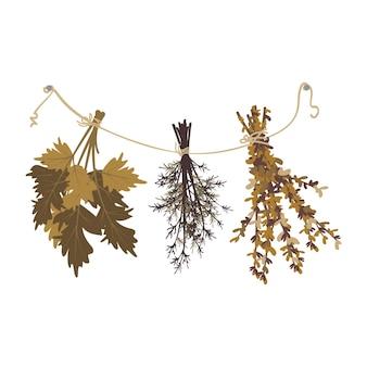 Mazzi di erba secca pendono dalla scopa da bagno o dall'erba della strega per la pozione