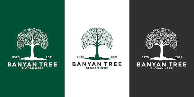 Bundle banyan tree logo design modello stile vintage vintage