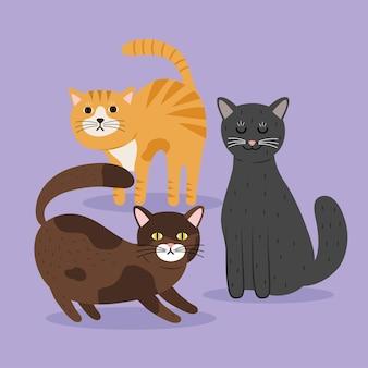 Fascio di gatti personaggi mascotte colori diversi