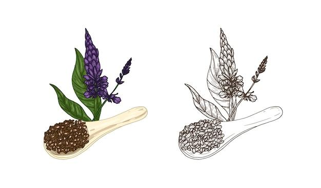 Fascio di disegni colorati e monocromatici della pianta di salvia hispanica e cucchiaio di semi di chia