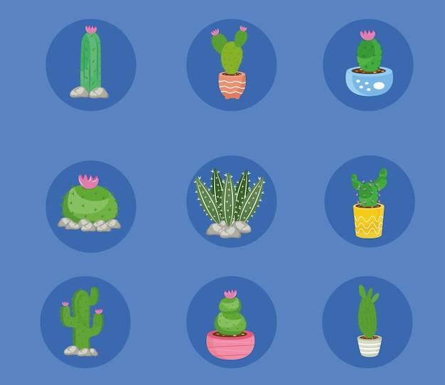 Fascio di nove piante di cactus impostare icone illustrazione design