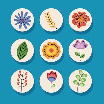 Pacchetto di nove decorazioni floreali impostare icone illustrazione