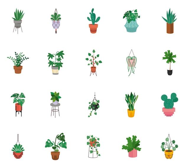 Fascio di venti piante domestiche in vaso di ceramica decor
