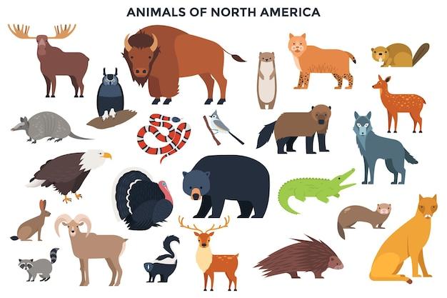 Fascio di animali selvatici e uccelli della foresta o del nord america. raccolta di abitanti del continente. set di simpatici personaggi dei cartoni animati isolati su sfondo bianco. illustrazione vettoriale colorato in stile piatto.