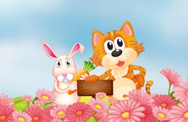 Un coniglio in possesso di una carota e un gatto in possesso di un cartello vuoto