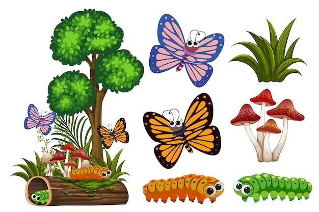 Farfalle e bruchi in giardino