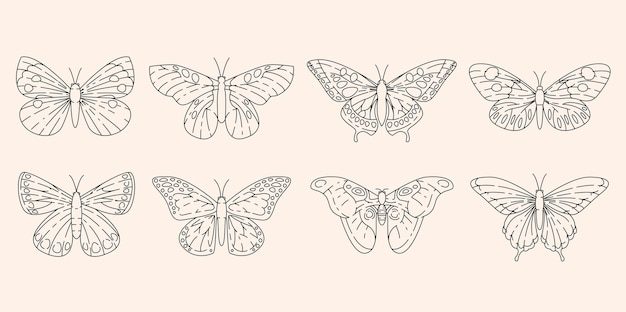 Farfalle incastonate nel disegno del contorno
