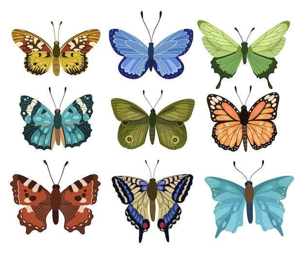 Collezioni di farfalle primaverili ed estive