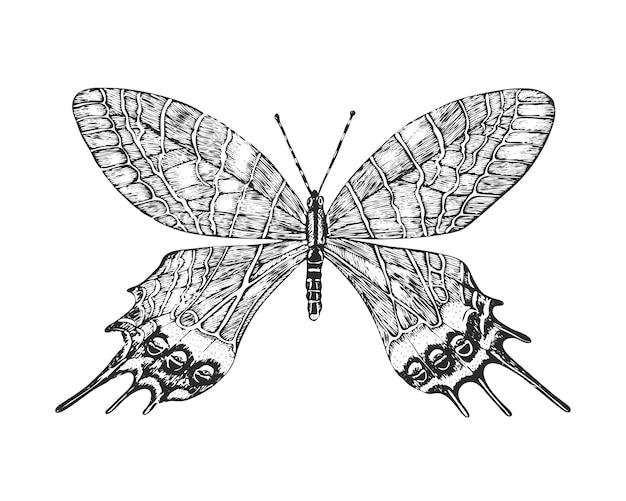 Farfalla o insetti di falene selvatiche. bhutanitis lidderdalii o gloria del bhutan.