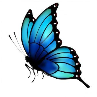 Farfalla con grandi ali blu su sfondo bianco.