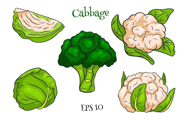 Cavolo insieme. cavolo fresco, broccoli, cavolfiori. in stile cartone animato. illustrazione vettoriale per design e decorazione.