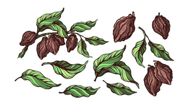 Set di piante di cacao