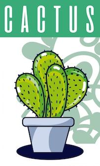 Pianta di casa di cactus