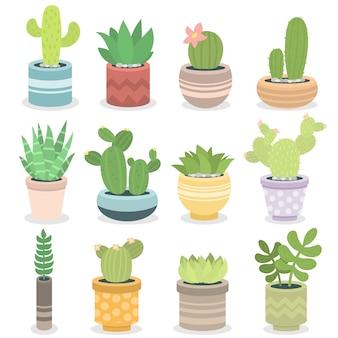 Illustrazione succulente della pianta tropicale di verde della natura del cactus.