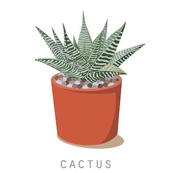 Pianta di cactus isolato su bianco
