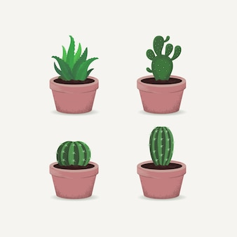Set di cactus