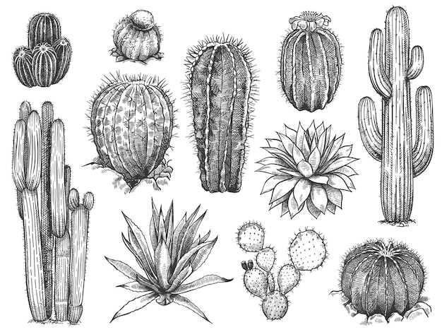 Set di schizzi di cactus Vettore Premium