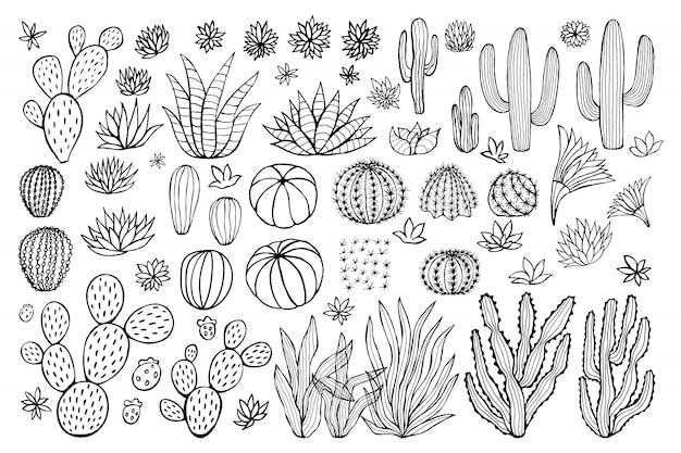 Collezione di succulente di cactus. sfondo pastello stile abbozzato di cactus. illustrazione di cactus disegnati a mano