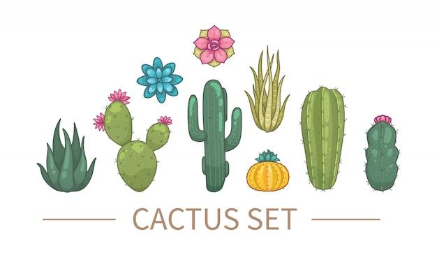 Cactus e piante grasse in stile cartone animato. cactus delle piante domestiche isolato su fondo bianco.