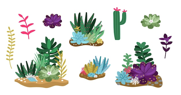 Cactus e succulente. composizioni di terrari o florarium. insieme di vettore di fiori, piante ed elementi decorativi della serra