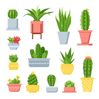 Cactus e succulente. cactus simpatico cartone animato in vaso. pianta domestica esotica messicana con spine e fiori. insieme di vettore succulente giardino decorativo. illustrazione pianta d'appartamento messicana, flora esotica in vaso