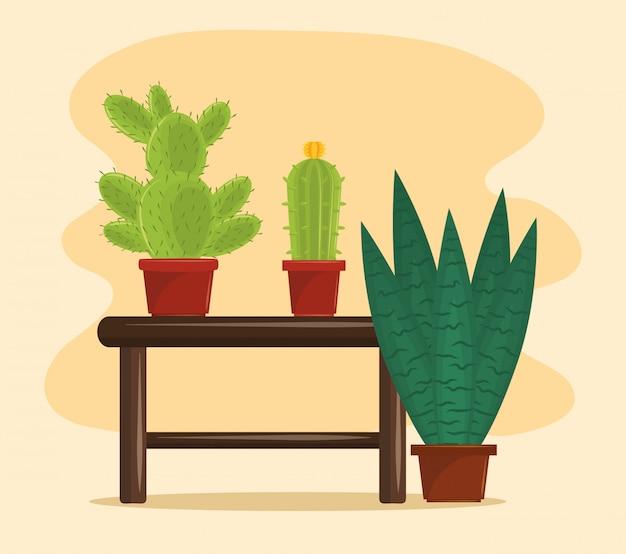 Vasi per piante grasse di cactus