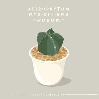 Collezione di tipi di cactus. cactus in vaso piccolo bianco isolato su sfondo beige.
