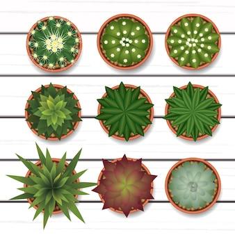 Cactus sull'illustrazione di vista superiore di legno bianco