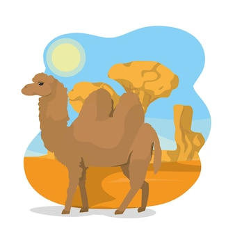 Cammello sul deserto