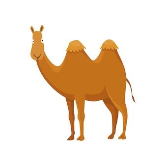 Cammello con due gobbe, battriano. animale del deserto in piedi, vista laterale. vettore dei cartoni animati. disegno dell'icona piatto, isolato su sfondo bianco