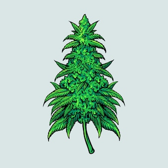Pianta di foglia di cannabis medica
