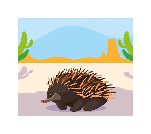 Scheda con echidna nel paesaggio australiano