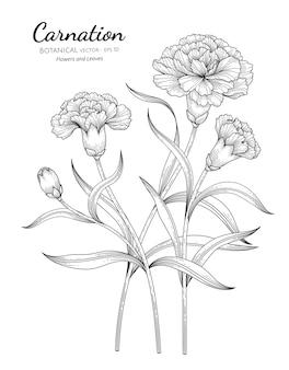 Illustrazione botanica disegnata a mano del fiore e della foglia del garofano con la linea arte su sfondi bianchi.