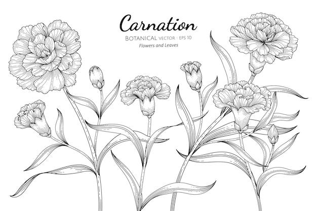 Illustrazione botanica disegnata a mano del fiore e della foglia del garofano