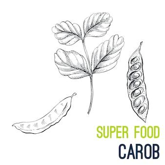 Carruba. disegnato a mano super cibo