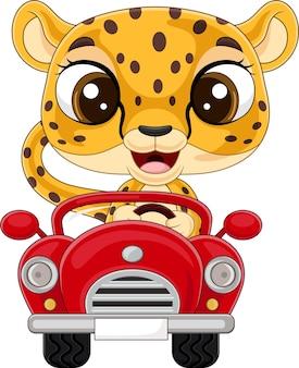Baby leopardo dei cartoni animati che guida un'auto rossa