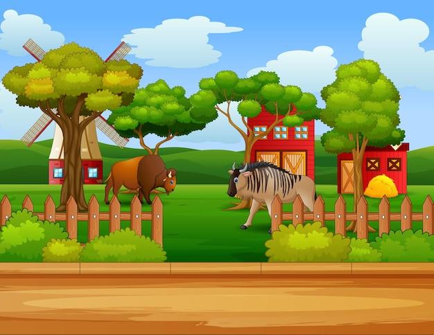Cartone animato di un bisonte e gnu nell'aia