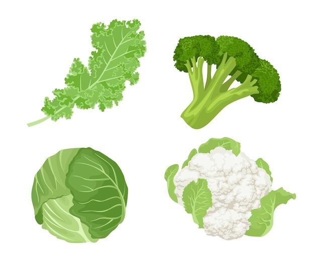 Cavolo, cavolo riccio, broccoli e cavolfiore del fumetto. set di verdure verdi.
