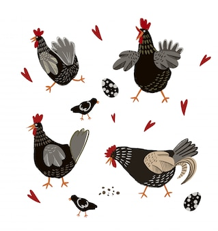 Pollo e uova del fumetto isolati.