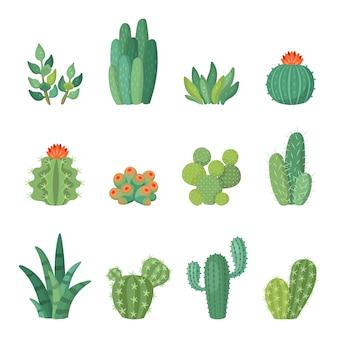 Insieme del fumetto colorato cactus e piante grasse del fumetto, fiori e piante. illustrazione isolata