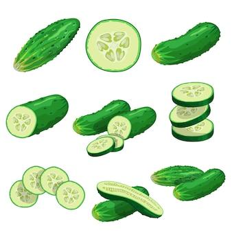 Set di cetrioli del fumetto. cetrioli interi, metà, fette volanti e gruppo di cetrioli. raccolta di verdure fresche di fattoria. illustrazioni su sfondo bianco.
