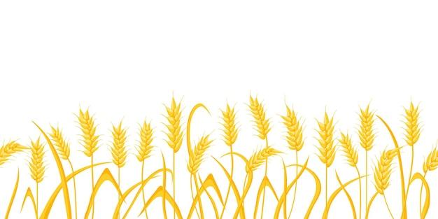 Fondo del campo dell'azienda agricola del fumetto con i picchi di grano dorato. orecchie del raccolto di cereali di agricoltura. scena rurale con motivo del bordo del vettore del raccolto di grano. illustrazione del chicco di grano dorato, cibo raccolto