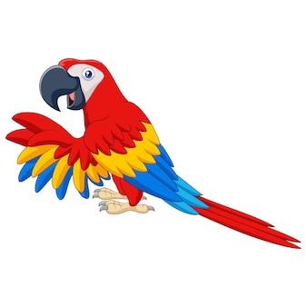 Macaw divertente del fumetto isolato su fondo bianco